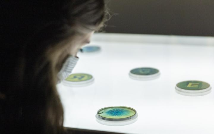 The photo shows a woman in semi-profile with a mask due to COVID-19 measures. She is looking at a colorful petri dish with her head bent towards the display case.