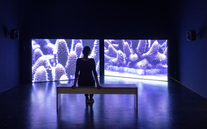 Ein Foto aus der Ausstellung »Critical Zones« am ZKM Karlsruhe, das Bild zeigt Leinwände auf die lilafarbene Korallen projiziert werden.