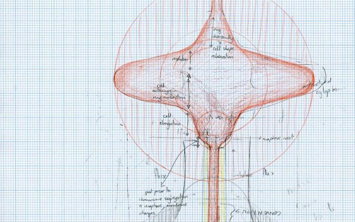 Zu sehen ist eine feine Zeichnung von Gemma Anderson auf einem weißen, blau karierten Blatt Papier.