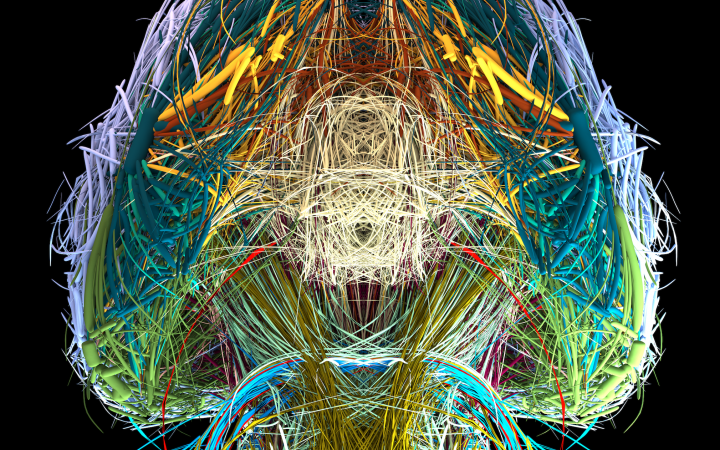 Visualisation of the connectome of a mouse brain in different colours from a bottom perspective