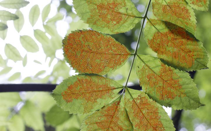 Baumblatt mit Muster