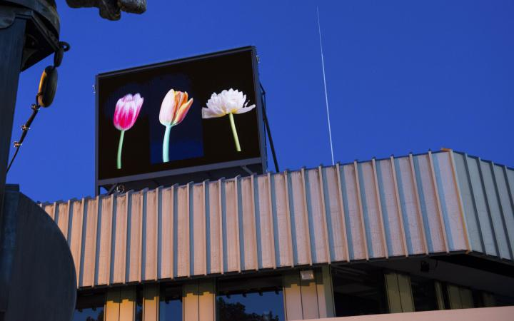 Ein Bildschirm über dem Badischen Landestheater in Karlsruhe zeigt drei bunte Tulpen.