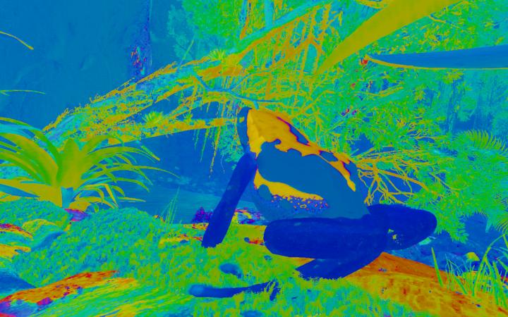 Grüne, blaue und gelbe Farben zeigen einen Frosch in natürlicher Umgebung