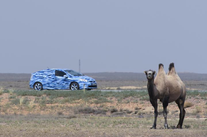 Ein blaues Auto und ein Kamel