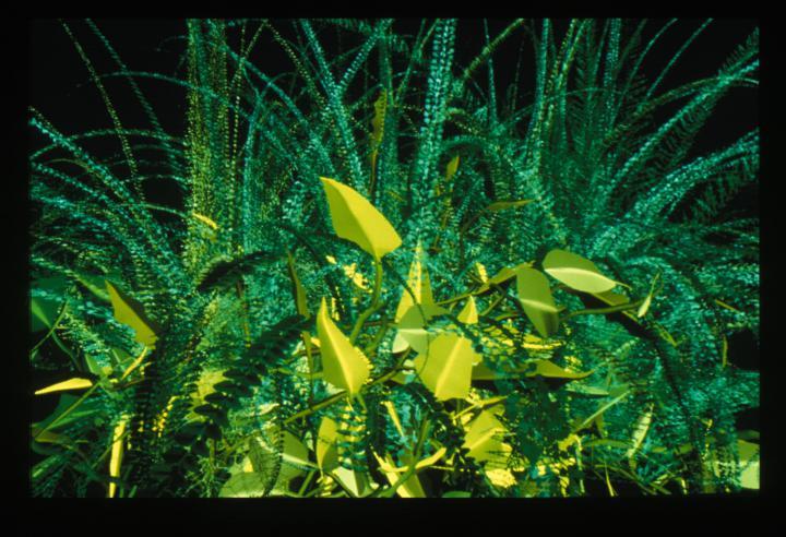Werk - Interactive Plant Growing