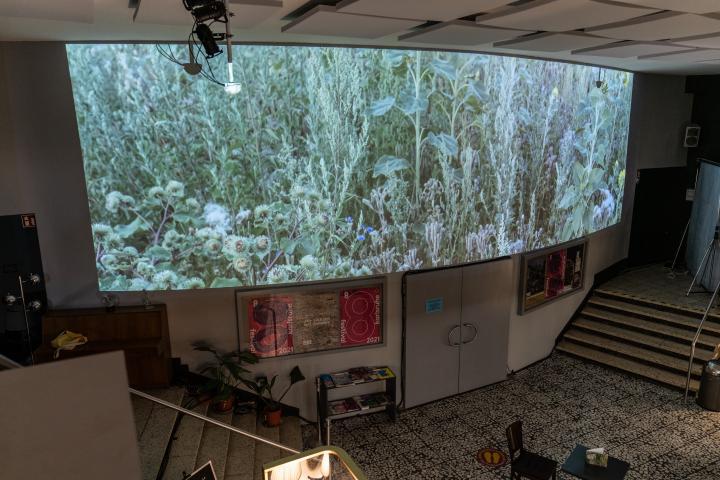 Auf dem Bild ist ein langgezogener Screen in einem Innenraum zu sehen, auf dessen Oberfläche eine grüne Wiese zu sehen ist.