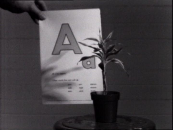 Werk - Teaching a Plant the Alphabet