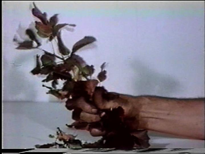 Werk - Compression-Poison Oak