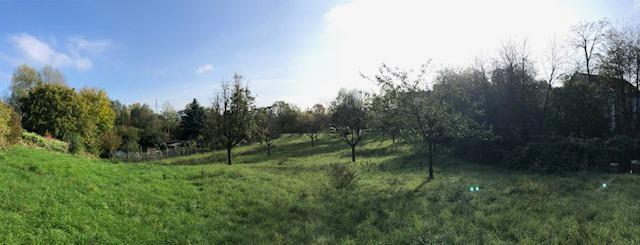Impression of the ZKM orchard